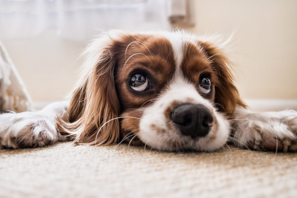 sad dog - menopause