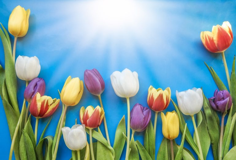 pretty flowers - what is menopause