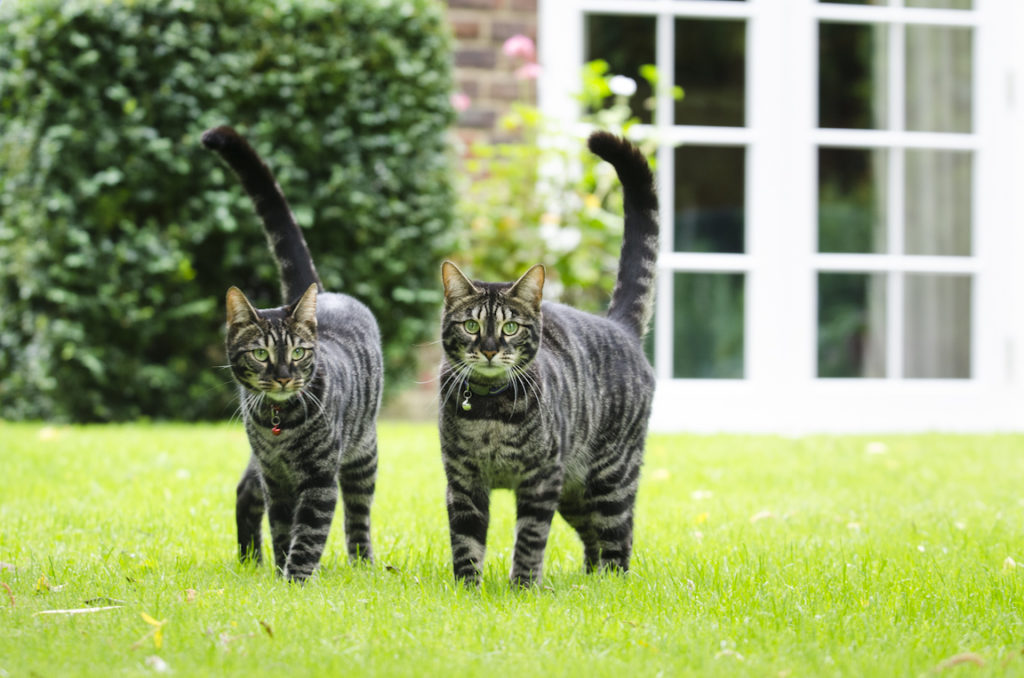 Homesitters Cats