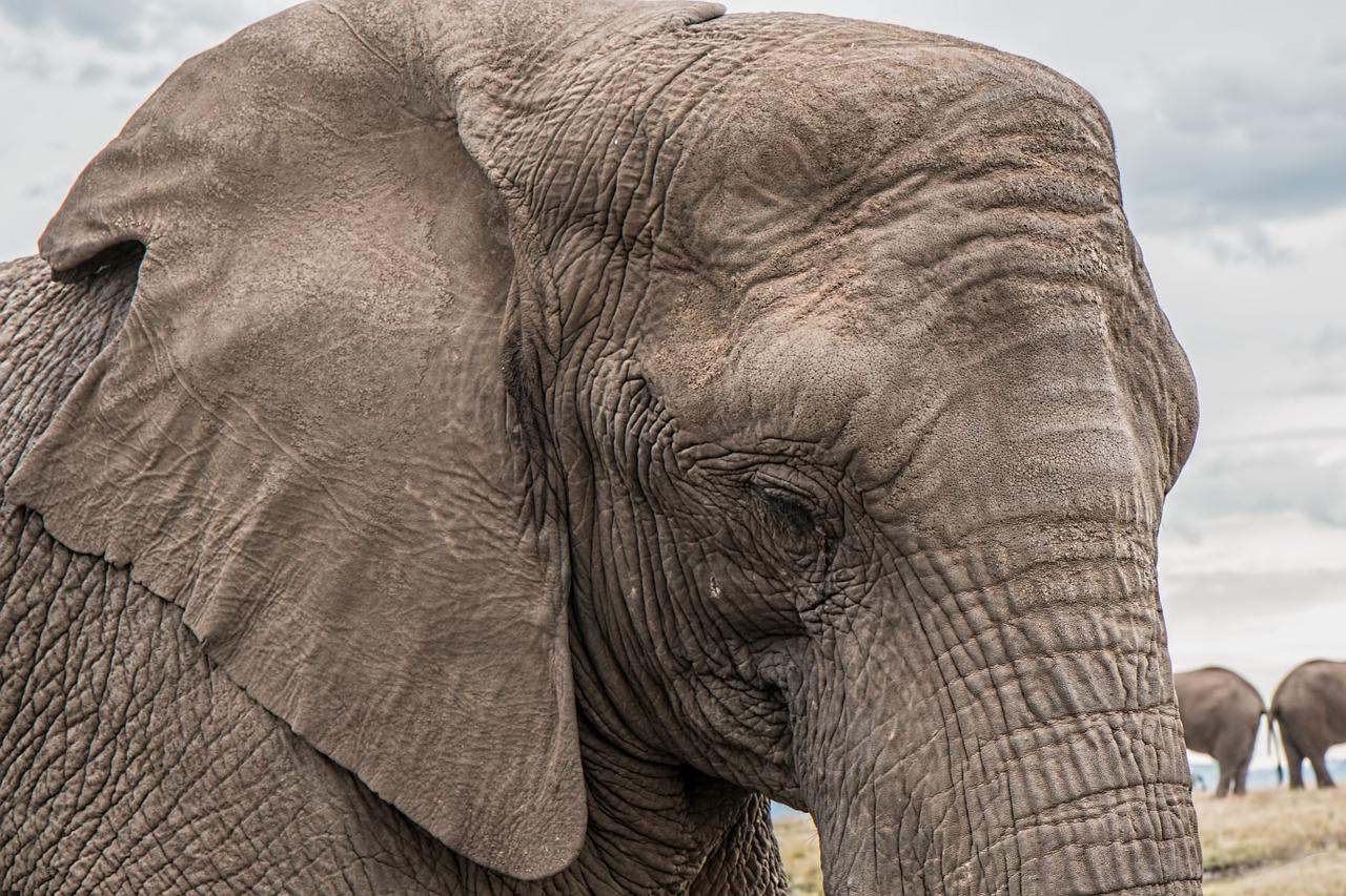 elephant - improve your memory